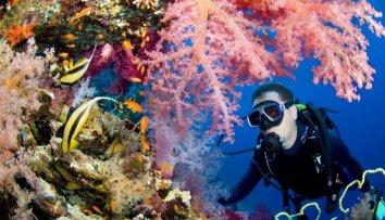 La plongée est une étape obligatoire pour les vacanciers. Pourquoi? Parce que la faune aquatique est impressionnante!