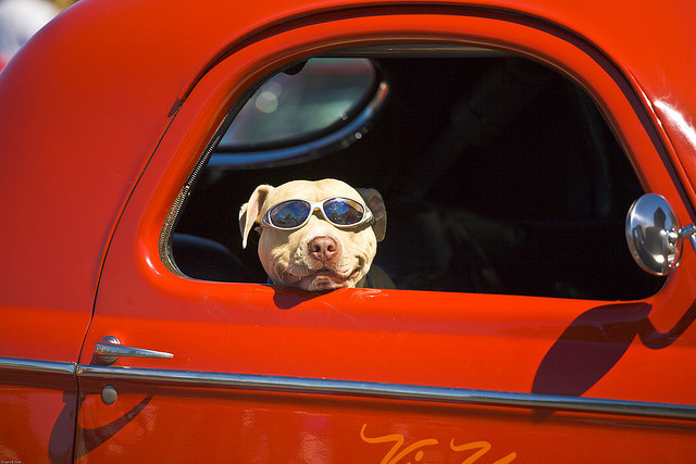 chien-voiture-fenetre